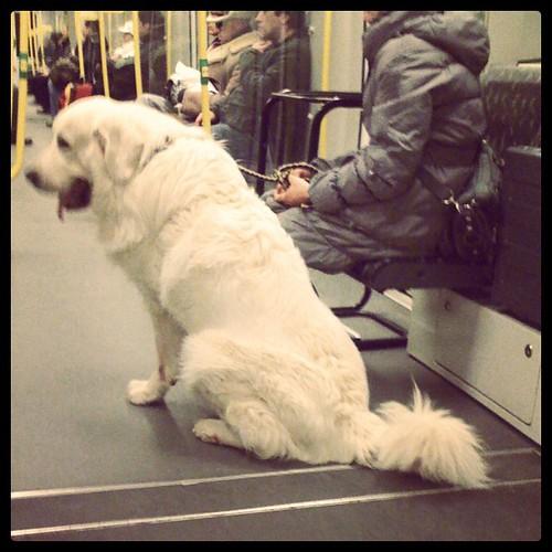 Da ist ein Eisbär in der U-Bahn!