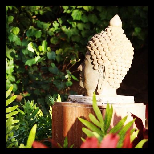 Garden Buddha by hashimaree