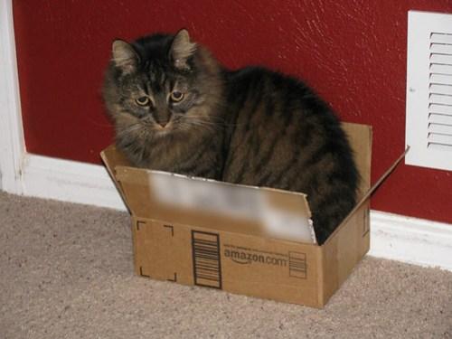 Schrodinger's Caturday