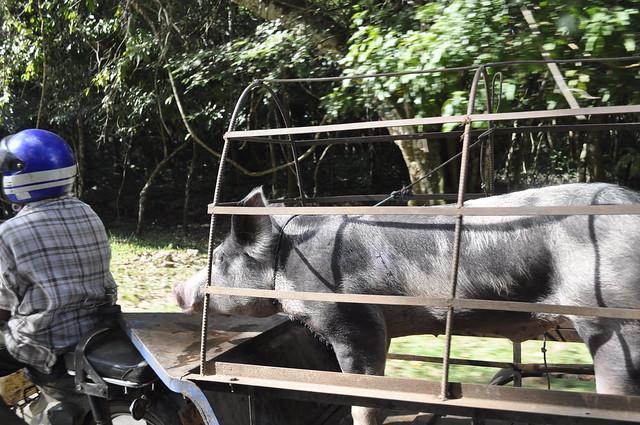 2011-11-22 Siem Reap 08