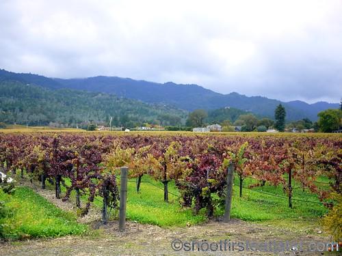 Corison Winery-9