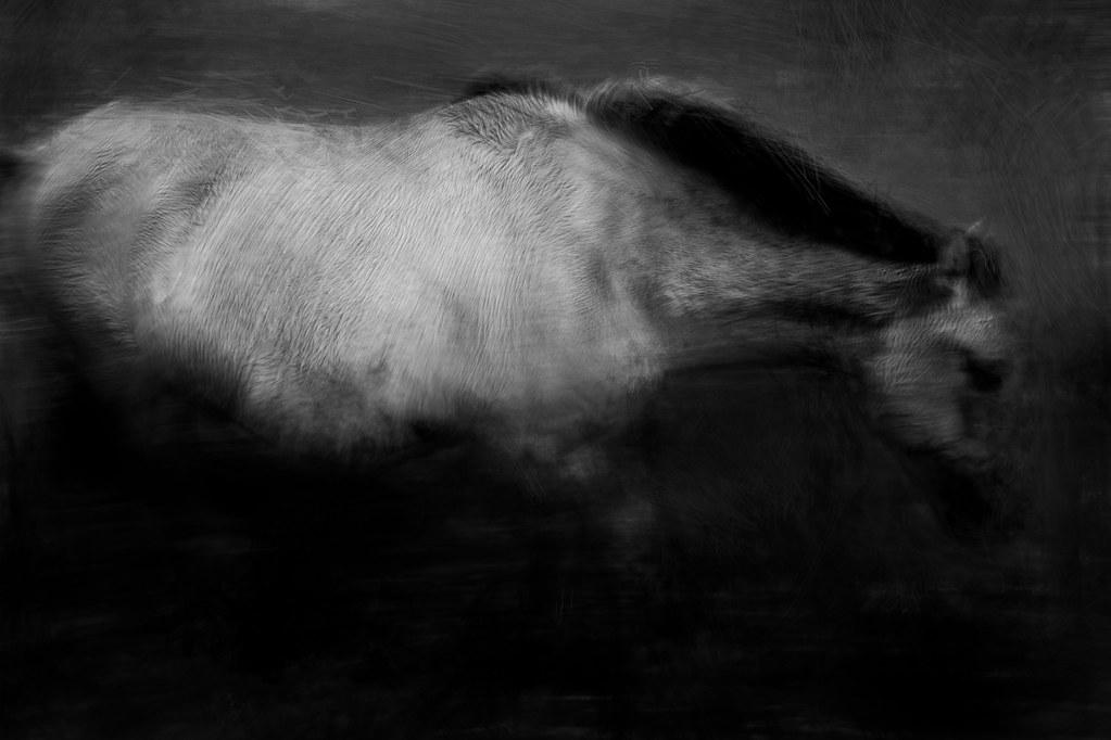 wild horses #8