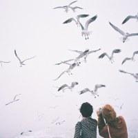Inspire (vtáky / birds)