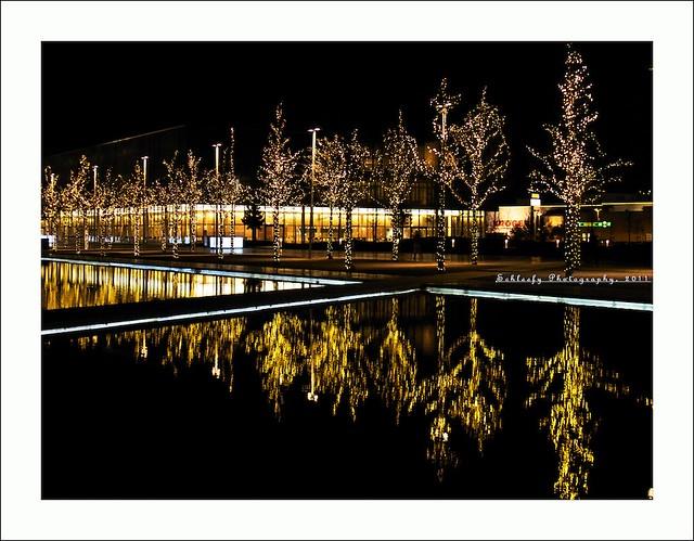 #334/365 Christmas Lights III