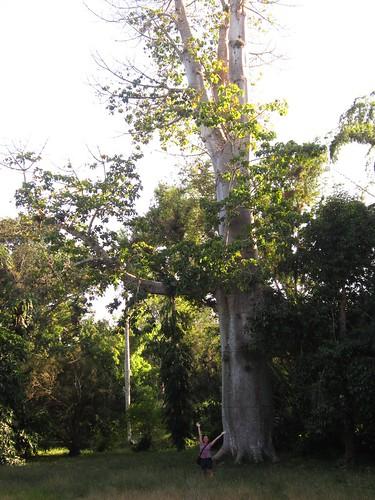 3/1/2012 - Jardín Botanico (Cienfuegos/Cuba)