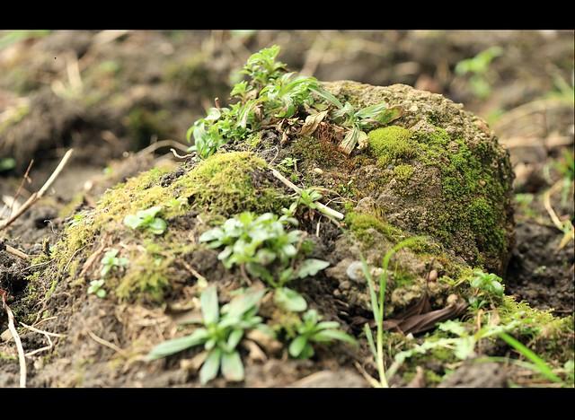 Brenizer Moss on Stone