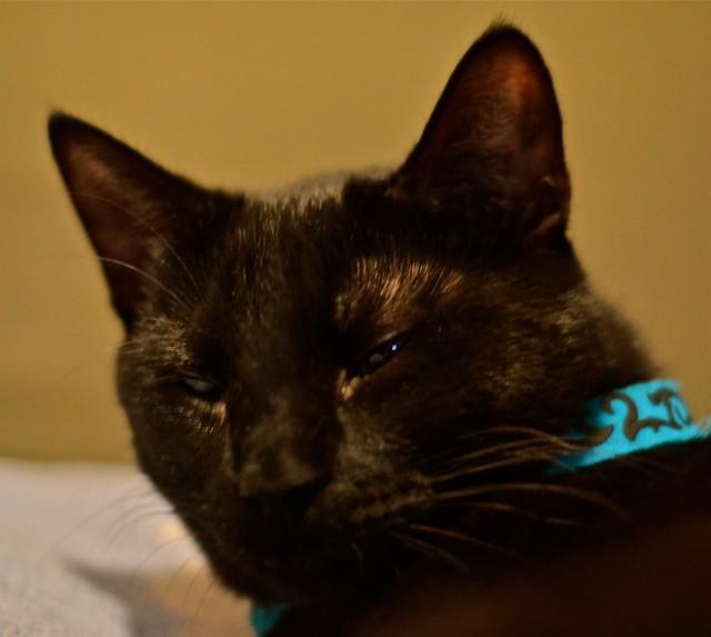 Annoyed Black Cat