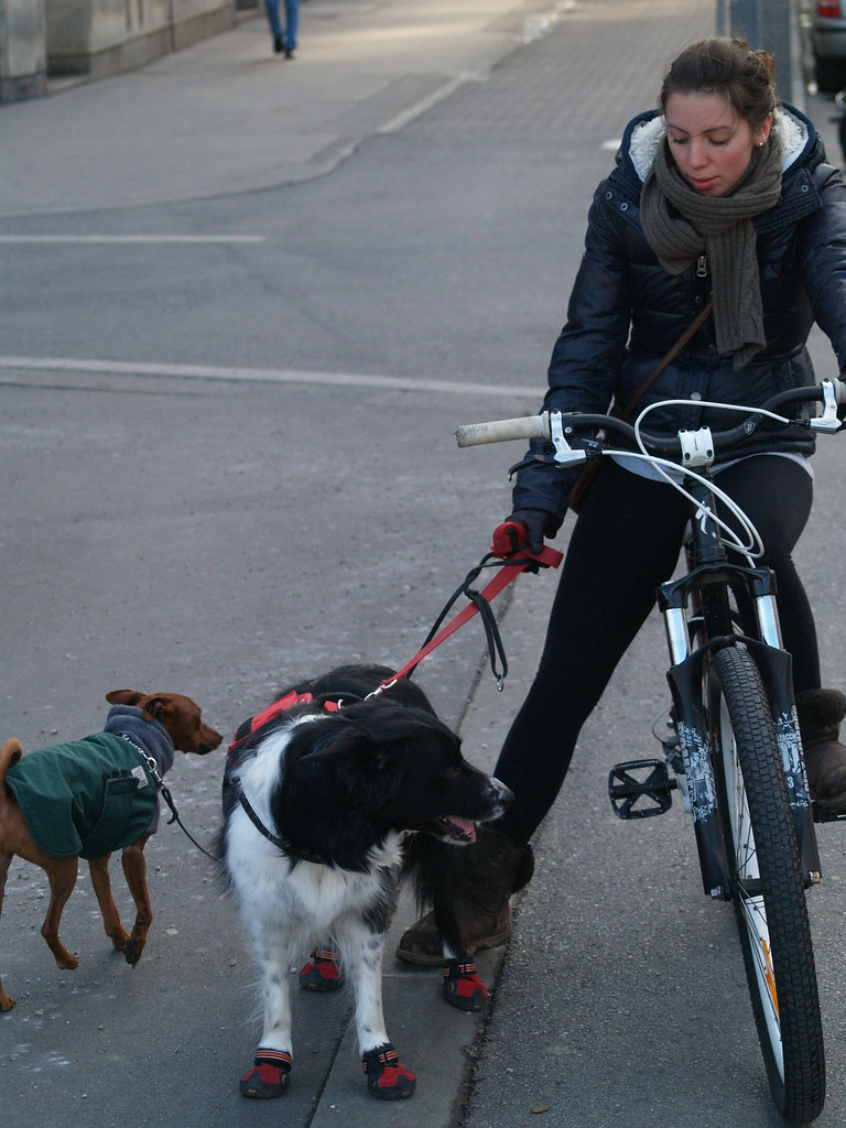 dog cycling