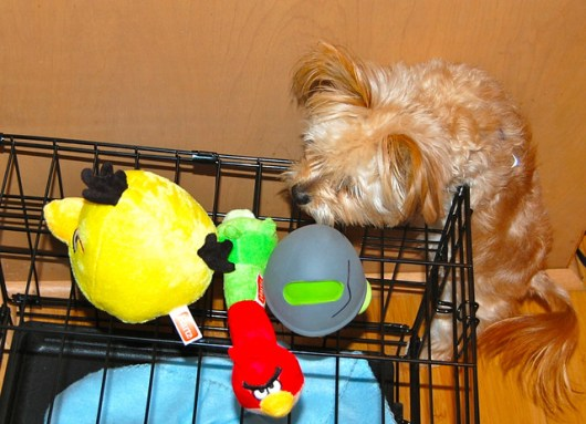 Loving his new Angry Birds dog toys