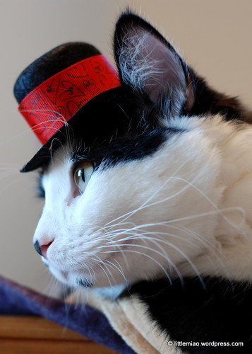 valentine's day hat for sprocket