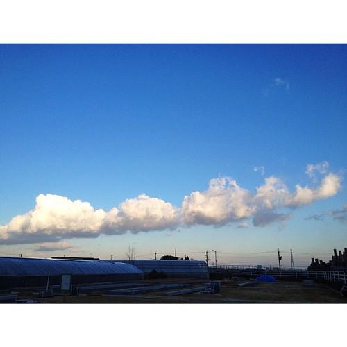 今朝の雲、カルガモのように連なってて、オモシロイ!  #sky #iphonography #instagram #iphone4s