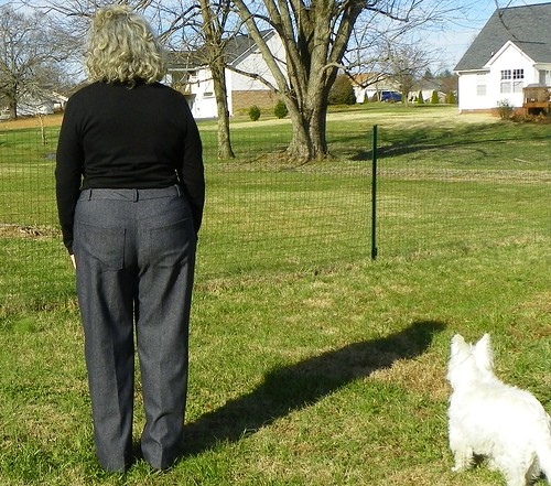 back w dog