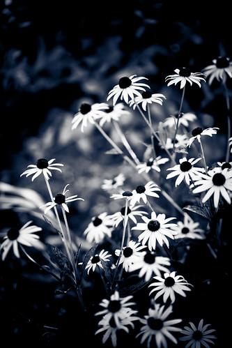 Wild Like My Flowers