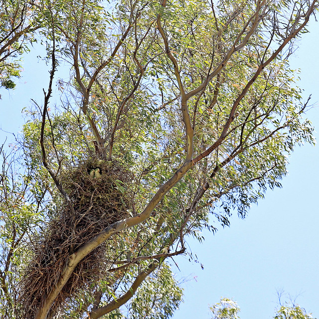 parrots in their nest