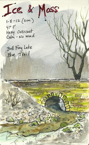20120108_bullfrog_sketch