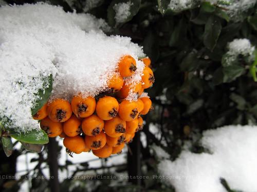 Quel che rimane di un giorno di neve... by [Piccola_iena]