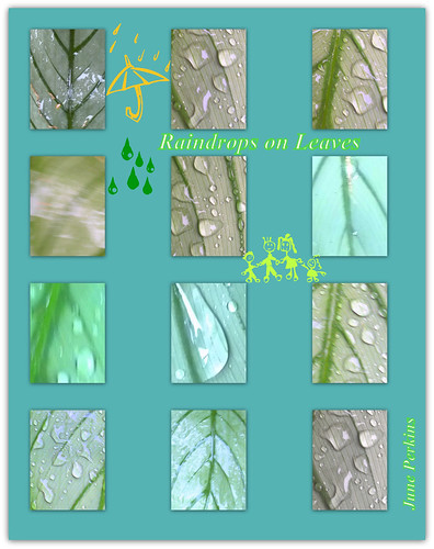 Raindrops on leaves by gumbootspearlz creations - June Perkins