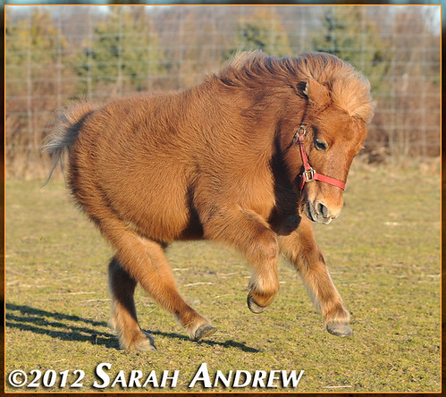 Star- available for adoption at Horse Rescue United