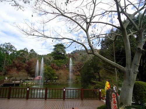 2012東勢林場櫻花28