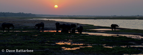 Chobe Elephant Sunset