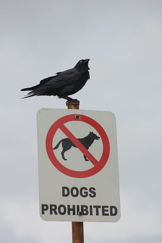 Dogs no crows ok