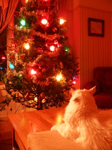 Bubba's 18th Christmas by Lady Birchwood