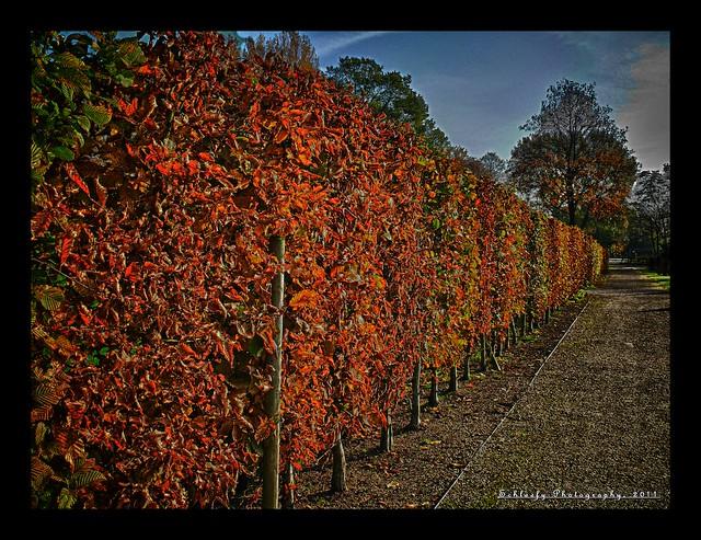 #348/365 Autumn....last one