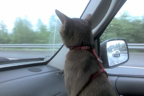 Finn in car
