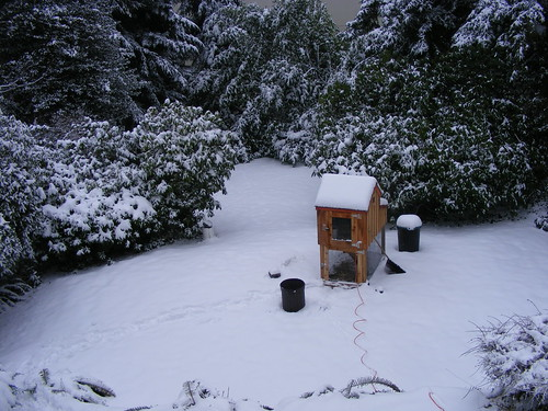 Snow covered coop by Quinnwick