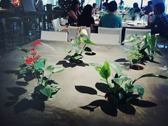 Potted Plants on Table, Food For Thought, Singapore Botanic Gardens