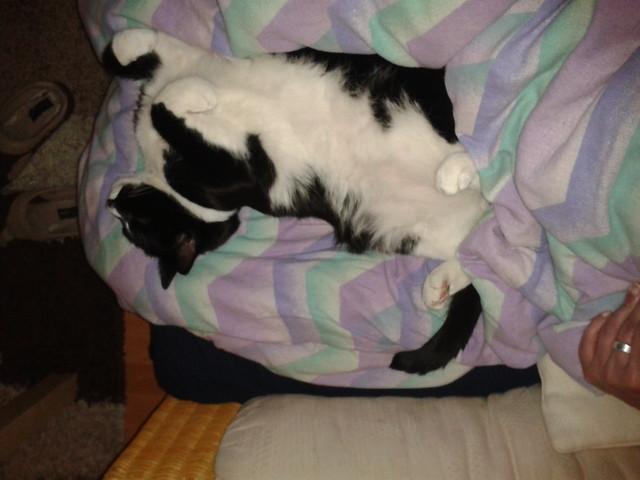 Napping Moritz