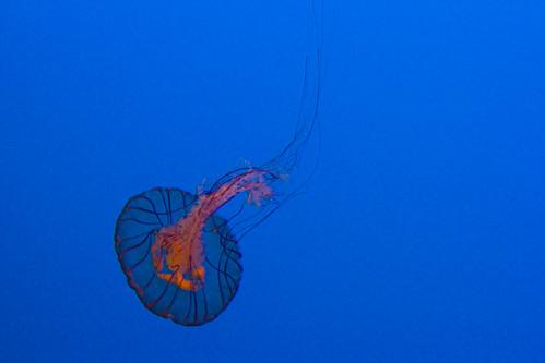 aquariumIMG_3837