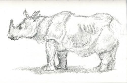 Rhinoceros by husdant