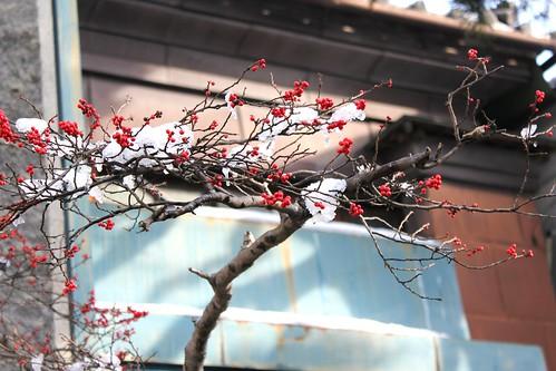 正月の南天 by takanosa