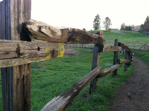 Fence dog park