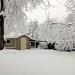 Backyard, February 04, 2012