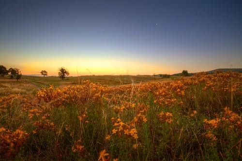 Wild Flowers by Jason_M_B