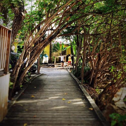 #lush walkway #lagoon #vegetation #islands #virginislands #caribbean #stt