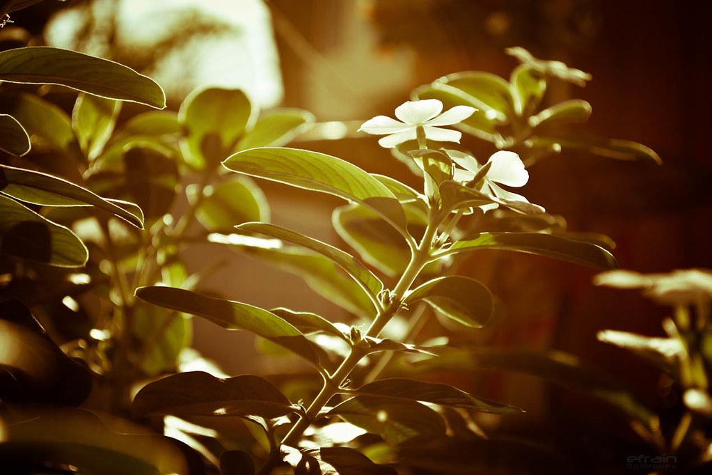 2012-01-27: Flores y sol