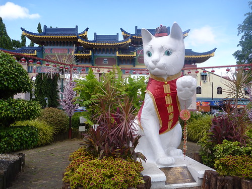The Great Cat dressed up for Chinese New Year