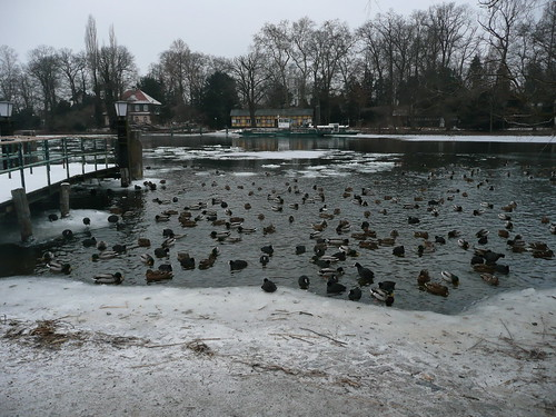 DucksLake