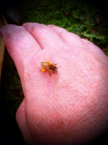 Bee with pollen on Mark's hand