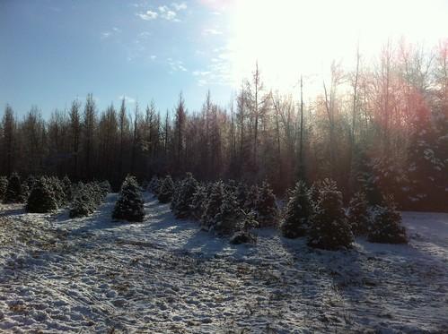 Tree farm!