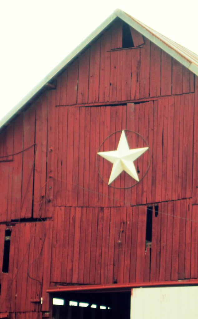 A Real Barn Star by OliveLoaf Design