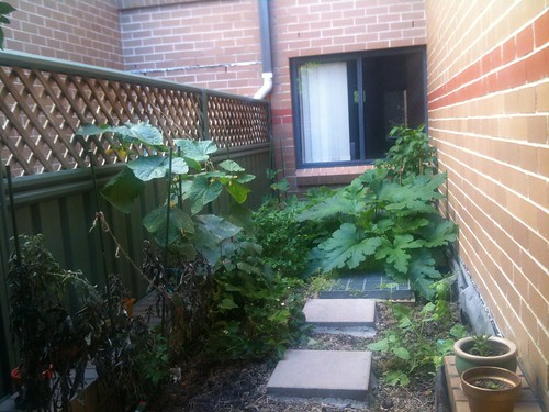 Garden Jan 2012