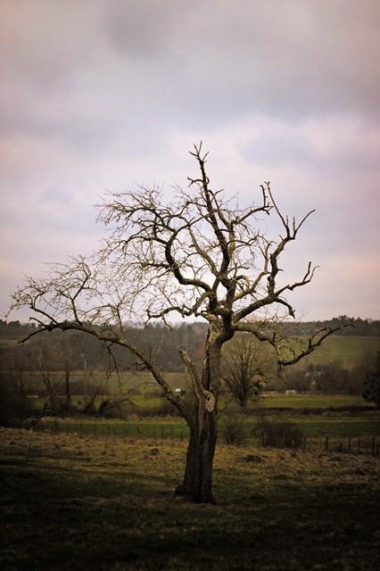Vieil arbre solitaire - lomo
