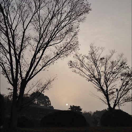 今朝のワンカット - お月様のような太陽だったよ!ლ(^ε^ლ) #iphonography #instagram #iphone4s