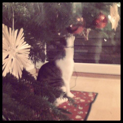 Die Katze und der Baum...;)