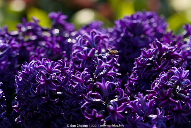 flora-1646