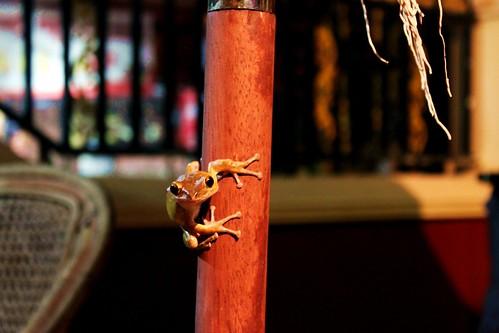 Hostel frog